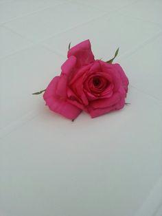 Photo by AngelaRizzo® ~ rose