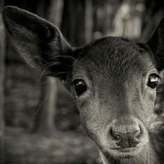 closeup deer