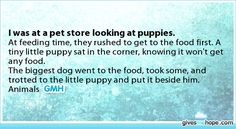 Other - I was at a pet store looking at puppies.