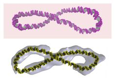 Supercoiled DNA is far more dynamic than the 'Watson-Crick' double helix - http://scienceblog.com/80618/supercoiled-dna-is-far-more-dynamic-than-the-watson-crick-double-helix/