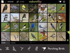 NatureTap (free) -- developed here in Vermont, the free version of Nature Tap includes 28 North American birds, with images, range maps, song/call recordings, and description.  Other in-app purchases available.