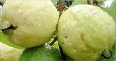 Muitos não sabem: esta fruta cura feridas, gastrite e controla pressão alta e triglicerídeos!   Cura pela Natureza