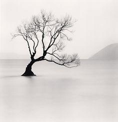 Wanaka Lake Tree, Study 1, Otago, New Zealand. 2013 | Michael Kenna