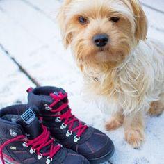 new shoes for Bommel #goretex #goretexbigdays #instadog #viking #newblogpost #linkinbio #goretexeu #instashoes