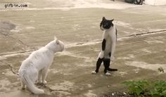 walking cat!