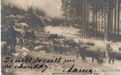 BU-F-01073-1-00357 Carte postală trimisă de la Constanţa de către regina Maria principelui Carol al II lea. Peisaj de munte, 1902 (niv.Document) Romanian Royal Family, Descendants, Queen Anne, Edinburgh, Royals, Country, Outdoor, Outdoors, Rural Area