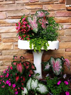 An old pedestal sink makes for a great planter for the garden. It already has the drain built in! Creeping jenny, begonias, caladiums, impatiens add color to my yard and brings new life to my old, unused sink. Garden Sink, Garden Art, Tall Planters, Balcony Planters, Outdoor Planters, Diy Planters, Balcony Garden, Old Sink, Pot Jardin