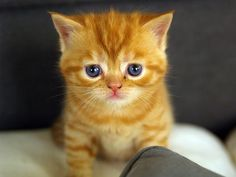 Cool Cat Pictures   Cat Pictures and Videos