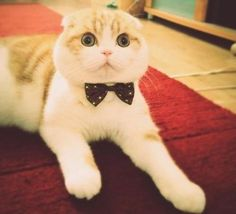 waffles-the-cat.tumblr.com
