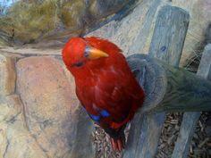 Woburn safari Parrot, Safari, Bird, Animals, Parrot Bird, Animaux, Parrots, Birds, Animal