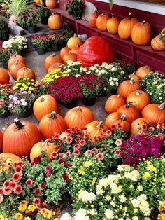 Pumpkins and mums on display at a local farm in Massachusetts Autumn Aesthetic, Autumn Activities, Summer Beauty, Pure Beauty, Fall Season, I Fall In Love, Farmers Market, Wild Flowers, Fall Decor