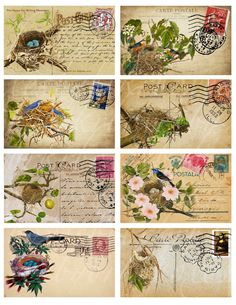 eight postcards with nests and birds 2.5 X 4 inches by boxesbybrkr