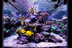Aquarium and orphek ATLANTIK LED lighting photo