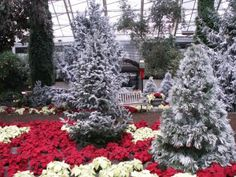Botanical Conservatory in Winter – Come Inside and Enjoy the Plants!