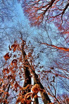 Altes Laub im jungen Wald  Foto: Alfred Pany