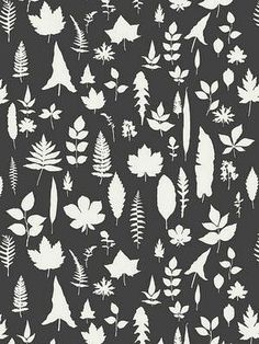 { Sch 5005023, Leaves Wallpaper,  DecoratorsBest }
