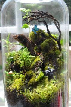 ... terrarium/ aquarium on Pinterest | Vivarium, Terrarium and Dart Frogs 10 Gallon Dart Frog Vivarium