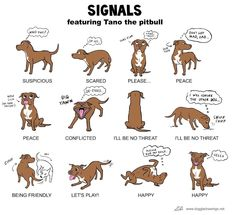 for all dog lovers