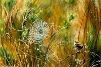alan m hunt Bird Artists, Bird Paintings, Photorealism, Wildlife Art, Wren, Natural World, British, Fine Art, Art Prints