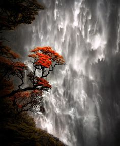 Devils Punchbowl Falls, Arthur's Pass, South Island, New Zealand (queenartemis)
