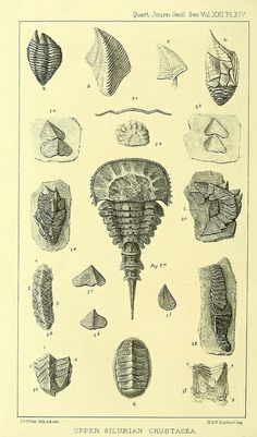 The Quarterly journal of the Geological Society of London.  v. 21 (1865)