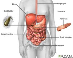 Abdomen anatomy diagram i love the human body pinterest your complete introduction to crohns disease and ulcerative colitis the digestive system contains many organs and runs between your mouth and your anus ccuart Choice Image