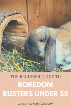It can be hard to entertain a small pet when you can't really take them for walks. Small animals love altering their environment and playing with chew toys, and here's 9 that you can pick up for less than Rabbit Toys, Pet Rabbit, Rabbit Breeds, Small Rabbit, Animal Activities, Boredom Busters, Pet Safe, Little Pets, Pet Health