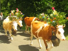 Cows decorated with flowers, thought you all would love this! Sara, Tiffany, Jill, Rhonna!