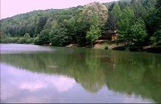 fish pond cabin
