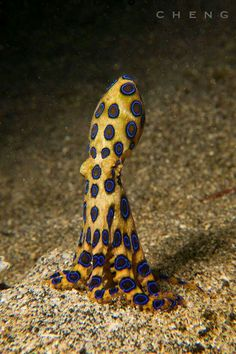 Squid with polka dots on sea creature