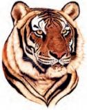 Photographic Tiger Tattoo