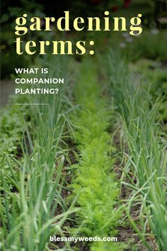 Plants are a lot like people--everything is better when you have a companion. That includes the vegetable plants you grow in your garden. Today we're talking more about companion planting, and why it can help you grow the best vegetable garden yet!