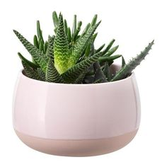 SUCCULENT Plant with pot, pink $14.99