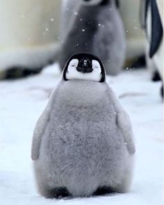 Cute Wild Animals, Baby Animals Super Cute, Baby Animals Pictures, Cute Animal Photos, Cute Little Animals, Cute Funny Animals, Animals Beautiful, Penguin Pictures, Happy Animals