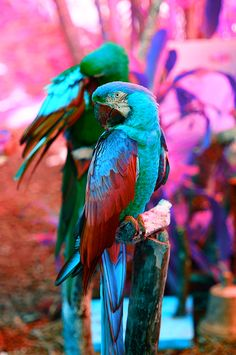 Beautiful tropical colors...