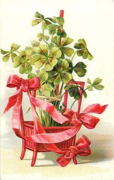 Bundle of shamrocks in red basket with red ribbon