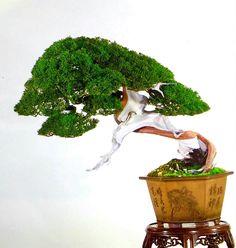 Juniper Bonsai, Herbs, Plants, Bonsai Trees, Painting, Bones, Bonsai, Painting Art, Herb