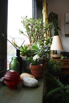 Vote for New Eco Landscapes Design   Build for Best Indoor Garden in the Gardenista Considered Design Awards!