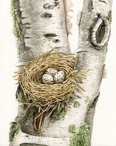 Cardinal's Nest In Birch Tree  8x10 by TracyLizotteStudios on Etsy, $350.00