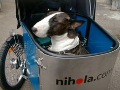 Dog - a cargo bike for doglovers