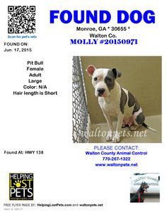 Found Dog - Pit Bull - Monroe, GA, United States