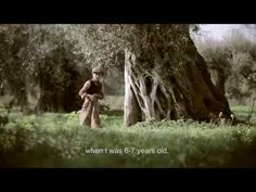 The Olive Tree Will Always Be Here - YouTube