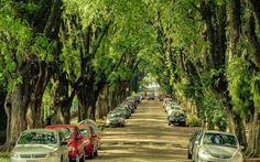 BioOrbis: Morar perto de árvores reduz casos de depressão, s...