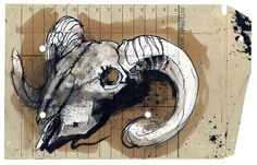 Duncan Cameron, Ram Skull study- working with students at college.  Originally pinned by the artist.