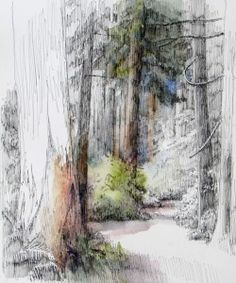 Forest Path//Paula Ensign..Bloedel Reserve