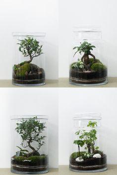 Moss terrarium with ficus bonsai Terrarium Diy, Bottle Terrarium, Bottle Garden, Glass Garden, Indoor Garden, Indoor Plants, Paludarium, Bonsai Garden, Growing Plants