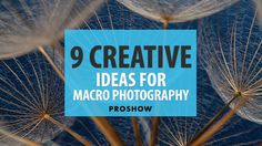 Stuck in a creative rut? Develop your #macro #photography skills w/ these fun 9 creative ideas to get you started.