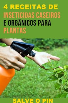 Insecticide, Permaculture, Vegetable Garden, Flora, Album, Nature, Plants, Outdoor, Homemade Bug Spray