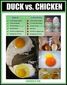 duck eggs vs. chicken eggs
