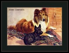 English-Picture-Poster-Print-Collie-Scottish-Terrier-Dog-Puppy-Dogs-Puppies-Art